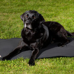 Back on Track® Canine Mattress, Cage Fit